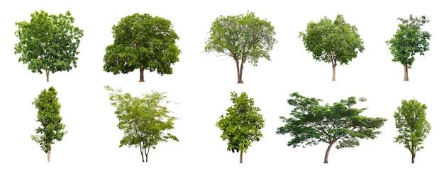 Impostare bellissimi alberi isolati su sfondo bianco raccolta di alberi isolati su bianco