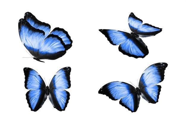 Un insieme di farfalle colorate è isolato su uno sfondo bianco. falene tropicali. insetti volanti. foto di alta qualità