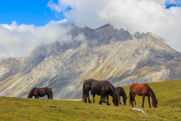 Set di cavalli al pascolo sull'erba verde con montagne e nuvole sullo sfondo. concetto di fauna selvatica