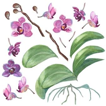 Set di orchidee disegnate a mano acquerello isolate per il tuo design