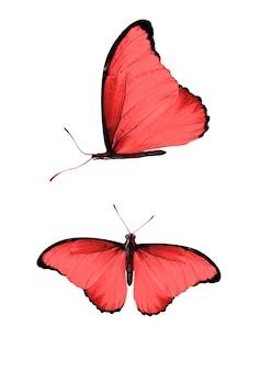 Set di farfalle rosse isolate su sfondo bianco. foto di alta qualità
