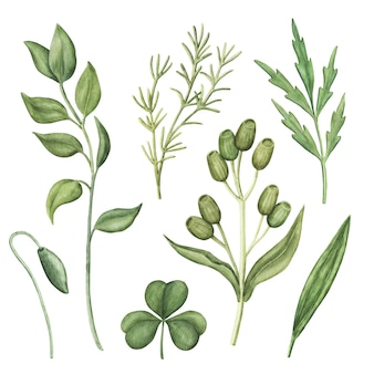 Set di verde dell'acquerello, erbe verdi e piante