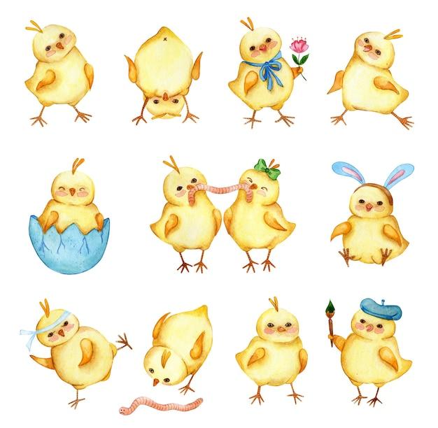 Serie di illustrazioni ad acquerello di simpatici polli gialli una grande collezione di adesivi