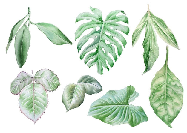 Set con foglie. illustrazione dell'acquerello. disegnato a mano.