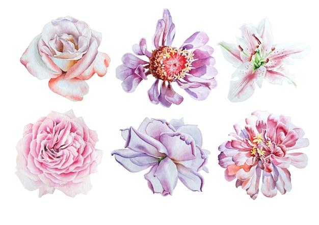 Set con fiori ad acquerelli. giglio. rosa. peonia. disegnato a mano.