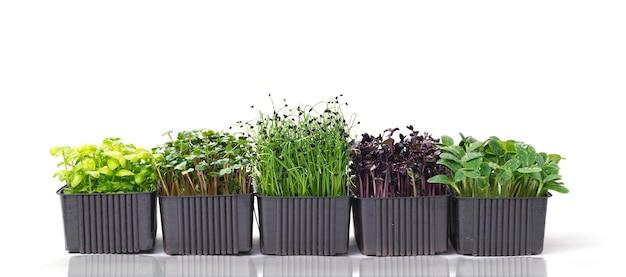 Diversi contenitori con un mix di microgreens su una superficie bianca con spazio per il testo