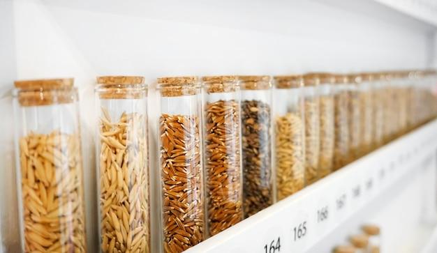 Diverse varietà di semi di riso in tubi di vetro