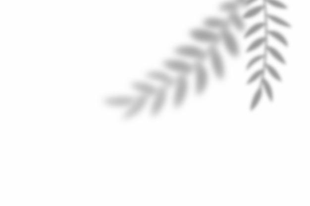 Ombra della sovrapposizione di foglie su sfondo bianco trama. utilizzare per la presentazione di prodotti decorativi.