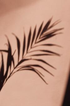 L'ombra di una foglia di palma su uno sfondo di rosa