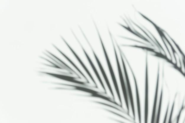 Shadow palm overlay sfondo sfocato ombra di un ramo tropicale di una palma