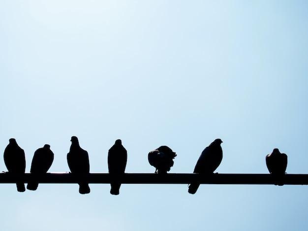 Ombra dei piccioni