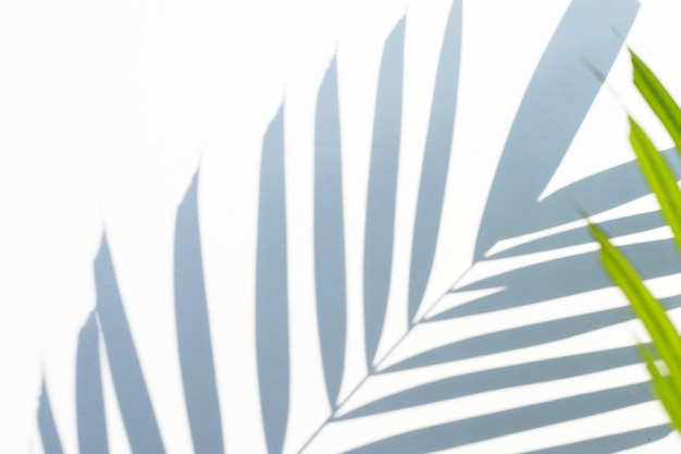 Ombra di superficie di foglie di palma tropicale