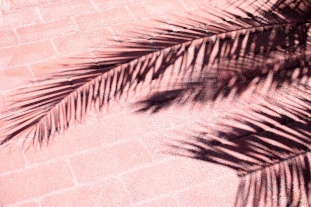 L'ombra di una palma tropicale su una strada ricoperta di piastrelle rosa.