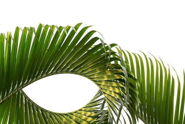 Forma di sfocatura del movimento foglia di cocco isolata su sfondo bianco