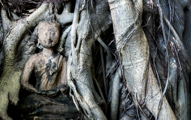 Forma di legno come buddha buono nella radice gigante og albero nel concetto spirituale con la natura