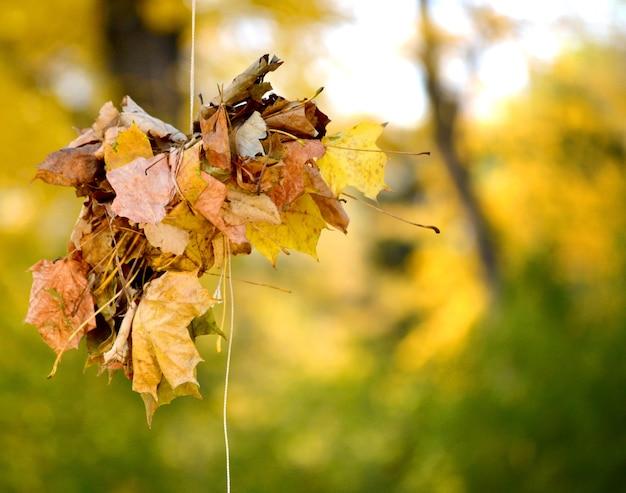 Fascio di foglie secche in autunno legate con filo