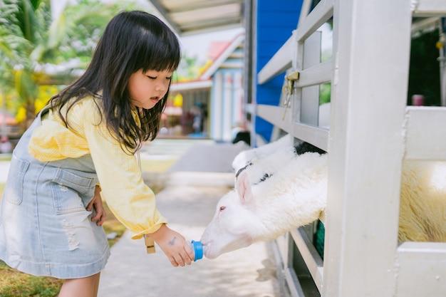 Alimentazione delle pecore piccola ragazza asiatica che alimenta la bottiglia per il latte alle pecore sveglie sull'allevamento di pecore.