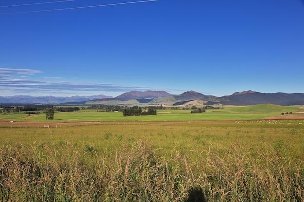 Pecore sull'isola del sud della nuova zelanda