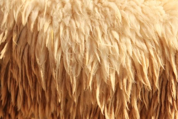 Trama di pelle di pecora