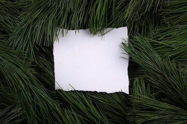 Un foglio di carta tra i rami di un pino.