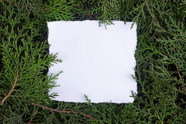 Un foglio di carta tra i rami di thuja
