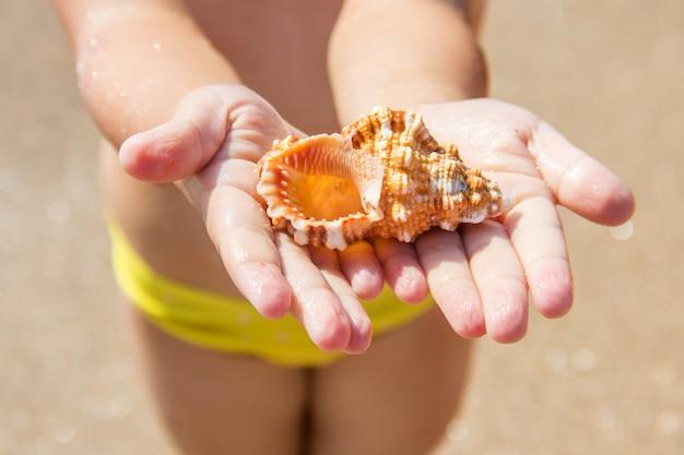 Conchiglie e stelle marine sul mare. foto estiva.