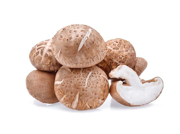 Funghi shiitake isolati su sfondo bianco