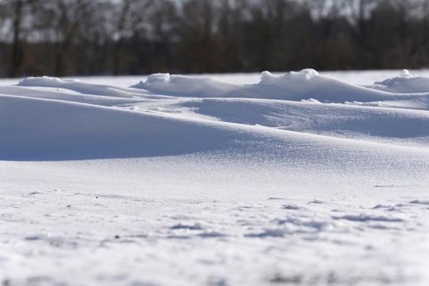 Neve splendente al sole dopo una bufera di neve sullo sfondo degli alberi