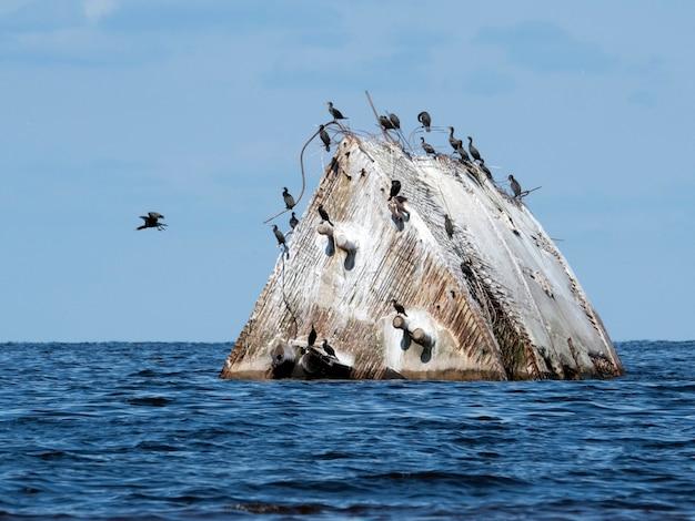 Prua del naufragio in mare con i cormorani su di esso in una giornata di sole