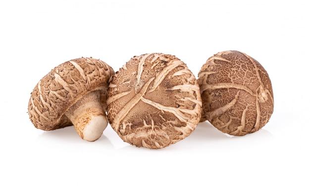 Shitake mushroom sul muro bianco