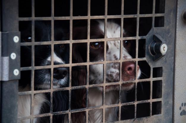 Sparare cane canino attesa nero bianco