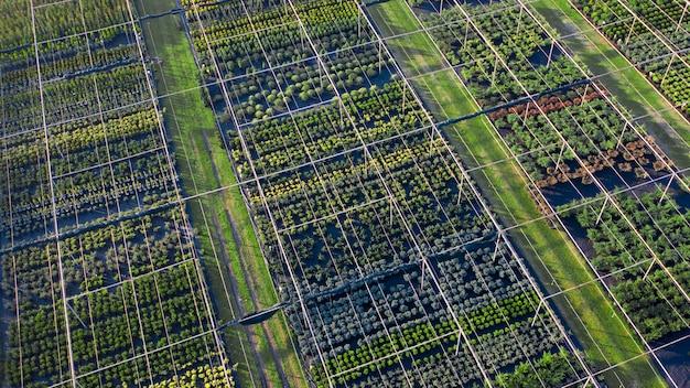 Negozio con una vasta gamma di piante ornamentali per l'abbellimento. vista del drone. vasto assortimento di piante di conifere, latifoglie e fiorite.