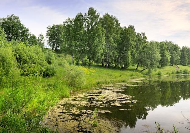 La riva di un lago della foresta riflessi d'erba spessi nell'acqua betulle verdi