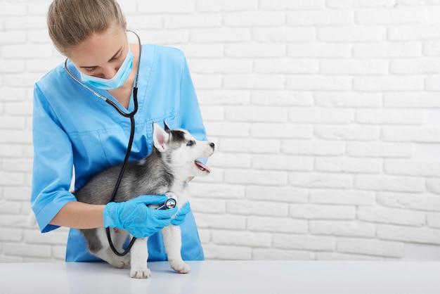 Sparato di un veterinario femminile professionale che lavora al suo ufficio medico