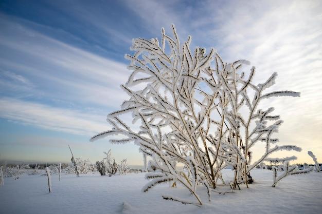 Arbusto nel gelo sullo sfondo del cielo