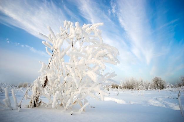Arbusto nel gelo su sfondo del cielo