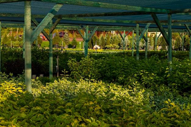 Arbusti e piante in un garden center per giardinaggio paesaggistico e piantati in vasche all'aperto