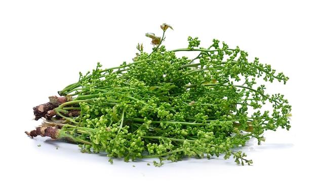 Albero di neem siamese, nim, margosa, chinine (azadirachta indica a. juss. var. siamensis valeton)