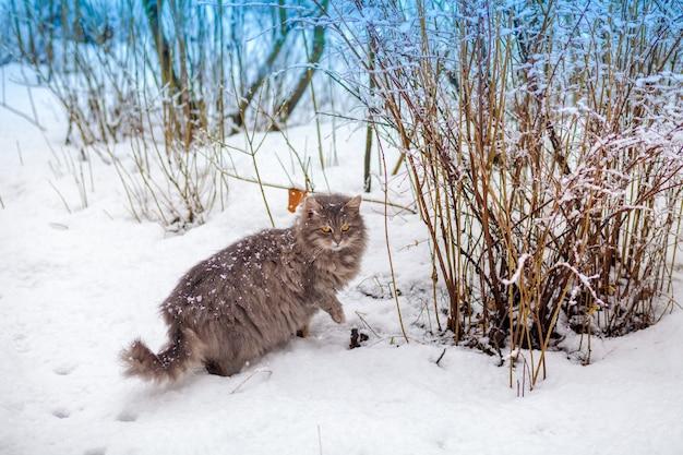Gatto siberiano che cammina nella neve