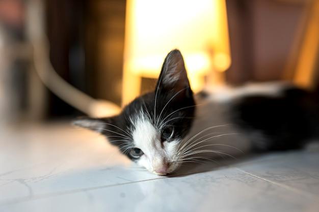 Il gatto malato giaceva debolmente sul pavimento con lo sguardo che fissava immobile cats health concept