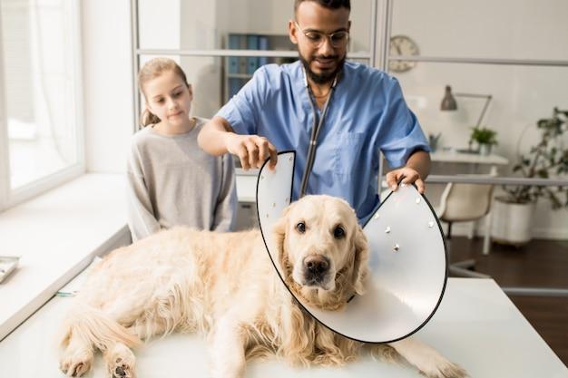 Cane malato che si trova sulla tavola mentre clinico dell'ospedale veterinario che mette imbuto intorno al suo collo prima della procedura medica