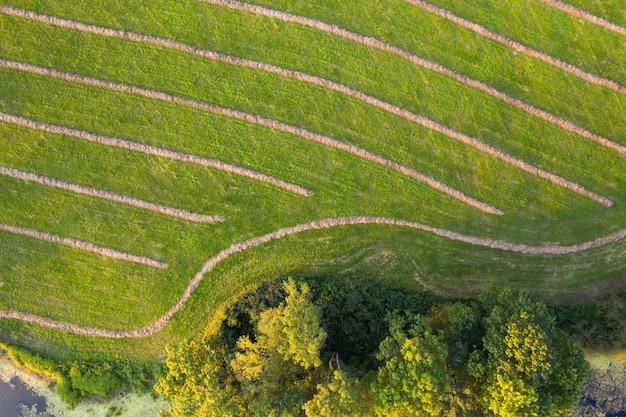 Lato di un prato falciato con strisce di fieno secco con alberi che crescono intorno dalla prospettiva aerea
