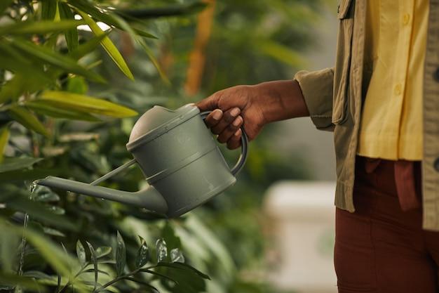 Vista laterale ravvicinata di un irriconoscibile donna afro-americana che tiene annaffiatoio mentre si prende cura di piante in ufficio, spazio di copia