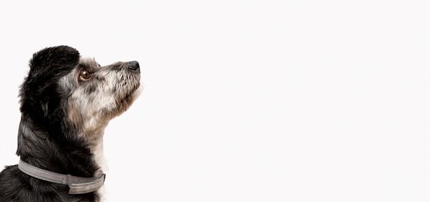 Vista laterale del simpatico cucciolo di razza mista guardando a destra con copia spazio