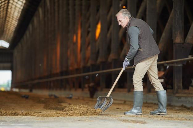Ritratto integrale di vista laterale del lavoratore agricolo maturo che pulisce la stalla della mucca mentre lavora al ranch della famiglia, spazio della copia