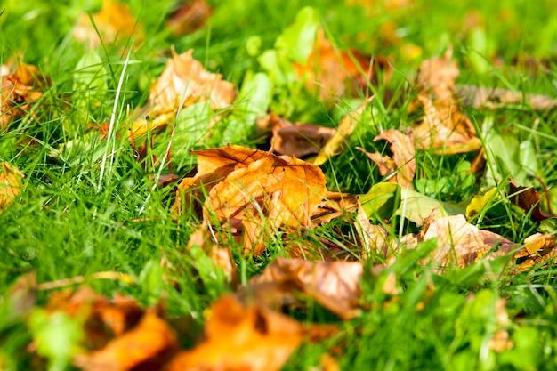 Vista laterale di erba verde e foglie cadute in autunno