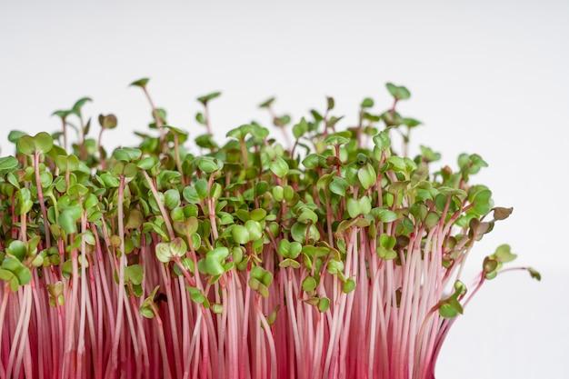 Vista laterale della crescita di microgreens di ravanello da giardino