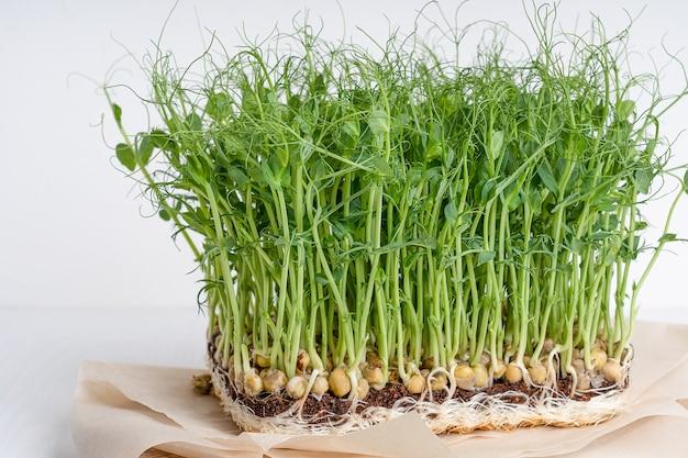 Vista laterale della crescita di microgreens di piselli con radici su carta bianca sul tavolo di legno
