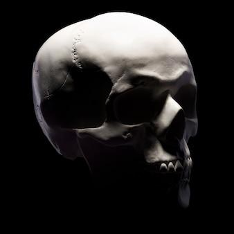 Vista laterale del modello in gesso del cranio umano isolato sul nero