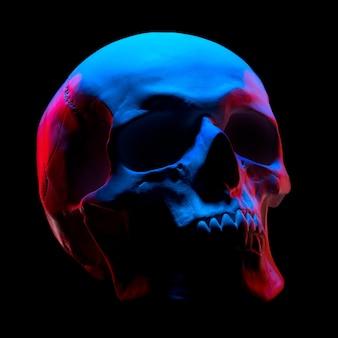 Vista laterale del modello in gesso del teschio umano in luci al neon